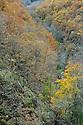 10/12/04 - THIERS - PUY DE DOME - FRANCE - Vallee des Rouets - Photo Jerome CHABANNE