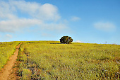 Early Morning Meadow with puffy clouds photograph