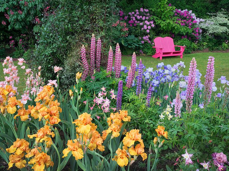 Garden chair and flower garden. Schrieners Iris Gardens, Salem, Oregon.