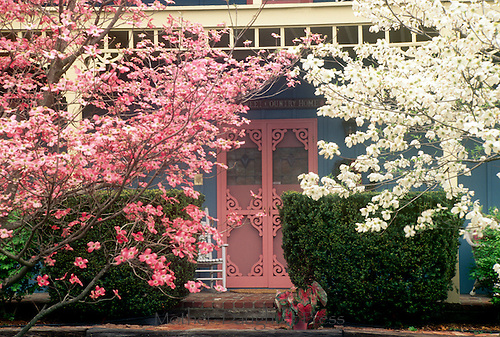 Front porch with unusual pink front door seen through flowering dogwoods Savannah, GA USA
