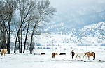 Horses stand in the snow in front of trees.