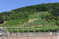 Weinberge am fränkischen Rotweinwanderweg in  Erlenbach am Main, Bayern, Deutschland
