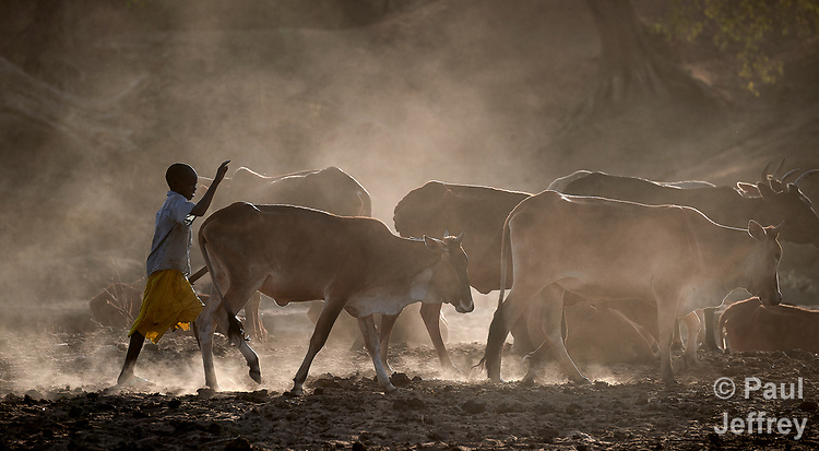 A boy cares for cattle in Gidel, a village in the Nuba Mountains of Sudan. The area is controlled by the Sudan People's Liberation Movement-North, and frequently attacked by the military of Sudan.