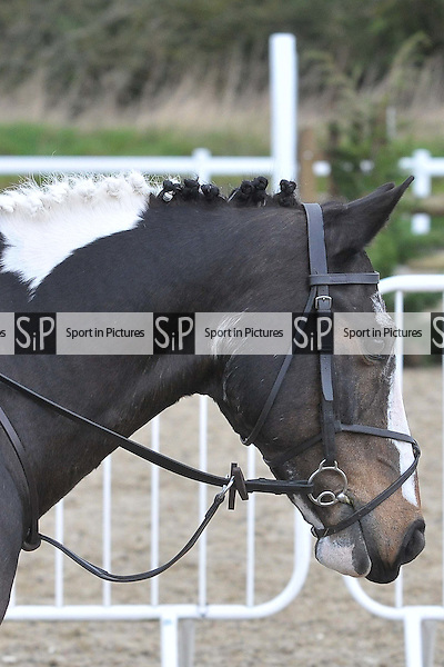 Class 2. BSPS Area 15 Essex april show. Brook Farm Training Centre. Essex. 16/04/2016. MANDATORY Credit Ellie Ingram/Sportinpictures - NO UNAUTHORISED USE - 07837 394578