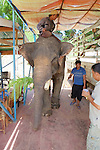 Elephant Being Loaded Onto Ferry To Bring It Across River