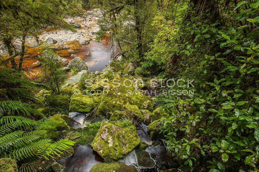 Oparara River, Buller District, West Coast, New Zealand - stock photo, canvas, fine art print