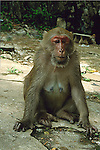INJURED FEMALE MACAQUE MONKEY