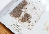 BNPS.co.uk (01202 558833)<br /> Pic: PhilYeomans/BNPS<br /> <br /> Even 1000 year old detritus was collected during the painstaking conservation..<br /> <br /> Woman's touch - 1000 year old book from the Royal Anglo-Saxon Convent of Wilton is conserved.<br /> <br /> The ancient book was returned safely to Salisbury Cathedral after fears of a lockdown led to a hastily arranged emergency dash from the conservators in Cambridge.<br /> <br /> Dating from the 10th century the incredibly rare Psalter is fascinating to medieval scholars for two reasons - it is thought to have been used and adapted by women, and it's latin text has been annotated into early English to aid the understanding of the Anglo Saxon noviates who would have studied it.<br /> <br /> Prof Teresa Webber from Cambridge University notes  'The vast majority of surviving medieval monastic manuscripts survive from communities of monks or canons, but at some point early in its history this psalter was clearly adapted for use by a woman, only a handful of such manuscripts survive to this day'.<br /> <br /> This is likely to indicate the book was in use by the nuns of the Benedictine Convent at nearby Wilton expanded by Alfred the Great after a famous victory against the Viking invaders in 871.