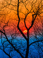 A sun set behind a tree in the Smoky Mountains National Park.
