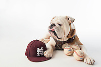 Champ (Bully) with baseball hat and baseballs on white studio background.<br />