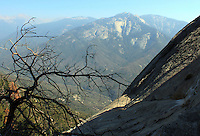 Stock photo: Dry leafless tree stands near a slope of Moro rock overlooking peaks of Sierra Nevada mountains in the Sequoia national park in California, USA.