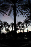 wide angle photograph by Paolo Diego Salcido-silhouette of palm trees in landscape at sunset night