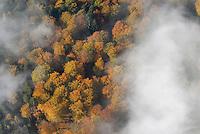 Sachsenwald: EUROPA, DEUTSCHLAND, SCHLESWIG- HOLSTEIN, REINBEK, (GERMANY), 25.10.2008: Sachsenwald aus der Luft, Herbstwald, Nebel, Schwaden steigen auf, Laubwald, Faerbung, Indian Summer,  abgeschieden, abgeschiedenheit, Autumn,  einsam, Einsamkeit, Fall, Fog, Gespenst, Gespenstisch, Ghost, Ghosty, Herbst, Landscape, Landschaft, Natur, Nature, Nebel,   Reise, Reisen, Stimmung, Travel, Umwelt, Wald, Luftbild, Luftansicht, Aufwind-Luftbilder.. c o p y r i g h t : A U F W I N D - L U F T B I L D E R . de.G e r t r u d - B a e u m e r - S t i e g 1 0 2, 2 1 0 3 5 H a m b u r g , G e r m a n y P h o n e + 4 9 (0) 1 7 1 - 6 8 6 6 0 6 9 E m a i l H w e i 1 @ a o l . c o m w w w . a u f w i n d - l u f t b i l d e r . d e.K o n t o : P o s t b a n k H a m b u r g .B l z : 2 0 0 1 0 0 2 0  K o n t o : 5 8 3 6 5 7 2 0 9.V e r o e f f e n t l i c h u n g n u r m i t H o n o r a r n a c h M F M, N a m e n s n e n n u n g u n d B e l e g e x e m p l a r !.