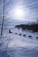 M Williams Mushes on Yukon Rvr to Grayling 99 Iditarod AK