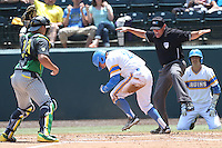 Ty Moore #29 of the UCLA Bruins celebrates scoring a run after beating the tag by Josh Graham #18 of the Oregon Ducks and being called safe by umpire Scott Higgins at Jackie Robinson Stadium on May 18, 2014 in Los Angeles, California. Oregon defeated UCLA, 5-4. (Larry Goren/Four Seam Images)