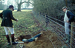 Terrier men digging  out a fox that has gone to ground. Fox hunting. England.