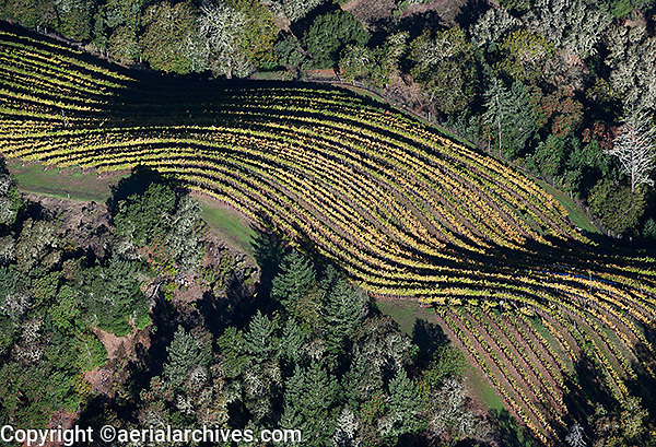 aerial photograph mountain top vineyard rows autumn Sonoma county Califonia