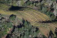aerial photograph mountain top vineyard rows autumn Sonoma county Califonia
