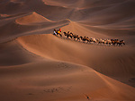 Pictured: A camel train is led along giant sand dunes at sunset, leaving a trail of prints behind them.  Accompanied by two herders they venture through the Kumtag Desert, which is part of the much larger Taklamakan Desert, in Xinjiang, China.<br /> <br /> Landscape photographer Kah-Wai Lin stood on higher dunes to capture the images.  The critically endangered Bactrian camels stand at around 7ft tall, and unlike other the more common Dromedary variety, have two humps.  SEE OUR COPY FOR MORE DETAILS.<br /> <br /> Please byline: Kah-Wai Lin/Solent News<br /> <br /> © Kah-Wai Lin/Solent News & Photo Agency<br /> UK +44 (0) 2380 458800