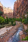 Into the Narrows, The Virgin River in Zion National Park, Utah, USA