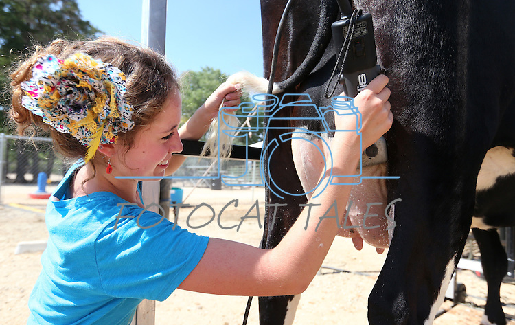 Holly Strasser, 15, of Carson City, shaves Sady for competition in the NV150 Fair at Fuji Park, in Carson City, Nev., on Friday, Aug. 1, 2014.<br /> Photo by Cathleen Allison