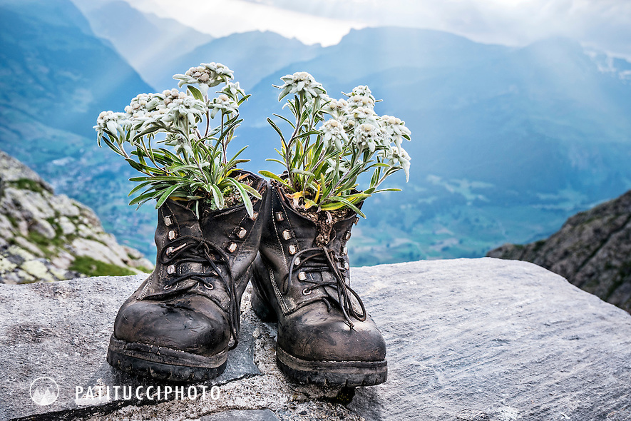An old pair of leather mountaineering boots sits at the Gleckstein Hut with Edelweiss growing in them. Grindelwald, Switzerland