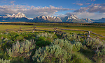 Grand Teton National Park, WY: Sunrise light on the peaks of the Teton Range and split rail fence in the Snake River Valley
