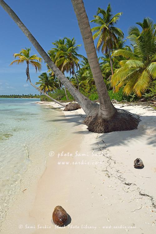 Coconuts on pristine tropical beach, Saona Island, Dominican Republic