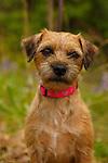 20150530 Earth Dog Portraits