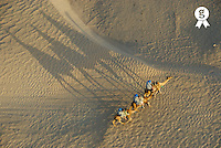 Tunisia, Douz, Sahara Desert, tourists on camel ride, aerial view (Licence this image exclusively with Getty: http://www.gettyimages.com/detail/sb10065474cj-001 )