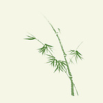 Elegant Japanese Zen art design in organic natural colors of a bamboo stalk with leaves, artistic illustration, green bamboo on ivory background