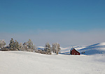 Idaho, North Central, Moscow. A red barn amongst the snow covered rolling hills of the Palouse.