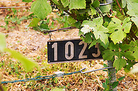 A sign specifying that the vines planted here are of the clone 1023 at the experimental vineyard of the CIVC at Plumecoq near Chouilly in the Cote des Blancs It is used for testing clones soil treatment vine treatments spraying, Champagne, Marne, Ardennes, France