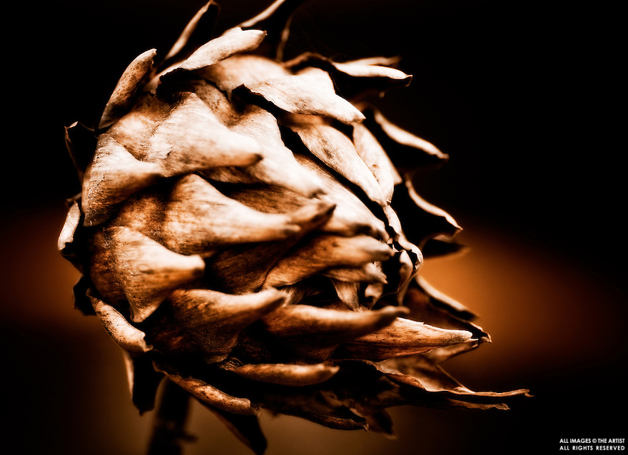 A whimsical dried artichoke giving the illusion of flight