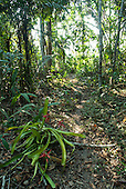 Aldeia Baú, Para State, Brazil. Path through forest with flowering bromeliads.