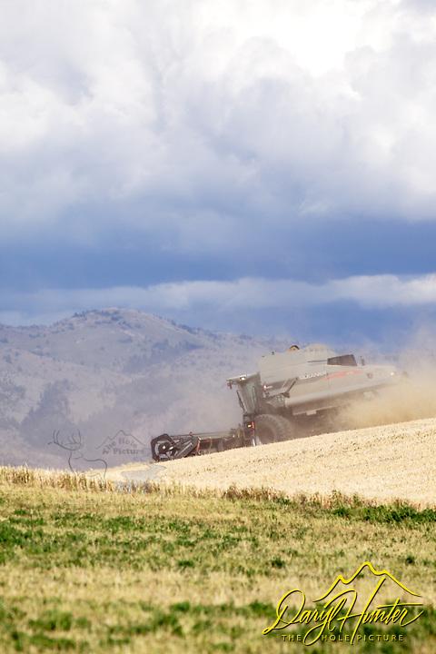Combine harvesting grain in Idaho.