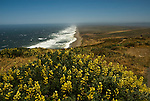 California: Yellow lupines at Point Reyes National Seashore near San Francisco. Photo copyright Lee Foster. Photo # casanf81230