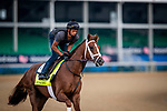 LOUISVILLE, KENTUCKY - MAY 02: Spinoff prepares for the Kentucky Derby at Churchill Downs in Louisville, Kentucky on May 01, 2019. Evers/Eclipse Sportswire/CSM