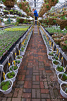 Gardeners ready a retail nursery greenhouse for its first customers of the spring as growing season begins.