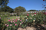 Rose Garden at Huntington Gardens, California, USA