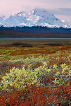 Fall landscape below Mount McKinley, Denali National Park, Alaska