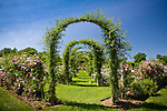 An allee of rose-covered arches at the rose garden in Elizabeth Park, Hartford, CT, USA