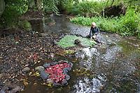 Naturkunst, Natur-Kunst, ein Kind, Juge legt ein Herz aus Steinen gefüllt mit rotem und grünem Laub in einem Bach, Blatt, Blätter, landart.