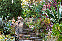 Stone stairway with Agave angustifolia variegata (Caribbean Agave), Jim Bishop and Scott Borden garden(