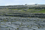 dalles de calcaire. ile d'Inishmore. limestone walls . Inishmore island