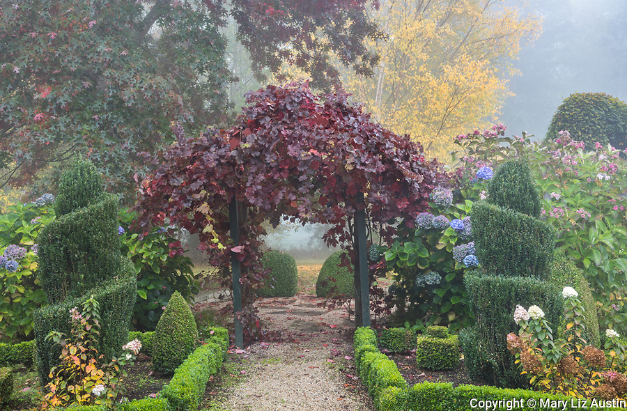 Vashon Island, Washington: Walkway with grape covered arbor also featuring boxwood and hydrangeas in fall.