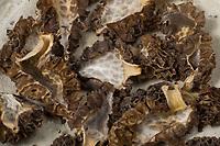 Speisemorchel, Speise-Morchel, Rundmorchel, Rund-Morchel, Morchel, Speisemorcheln, Morcheln, Pilzernte, getrocknet, getrocknete Pilze, Trockenpilz, Trockenpilze, Dörrpilze, Dörrpilz, Morchella esculenta, Morellus esculentus, common morel, morel, yellow morel, true morel, morel mushroom, sponge morel, morels, la Morille comestible
