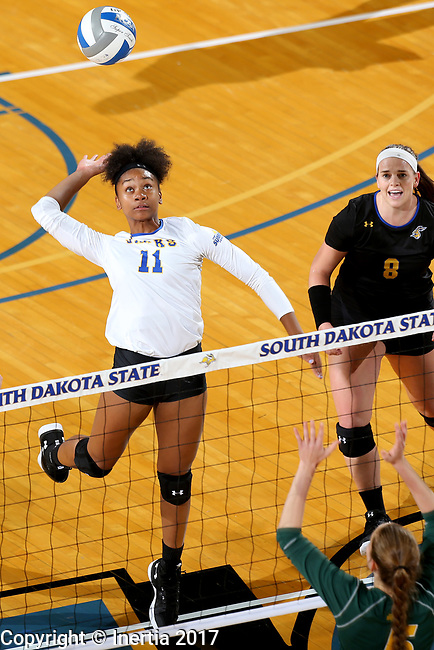 BROOKINGS, SD - SEPTEMBER 24: Payton Richardson #11 from South Dakota State winds up for a kill attempt against North Dakota State during their match Sunday evening at Frost Arena in Brookings. (Photo by Dave Eggen/Inertia)