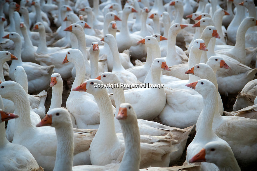 20/11/19<br />