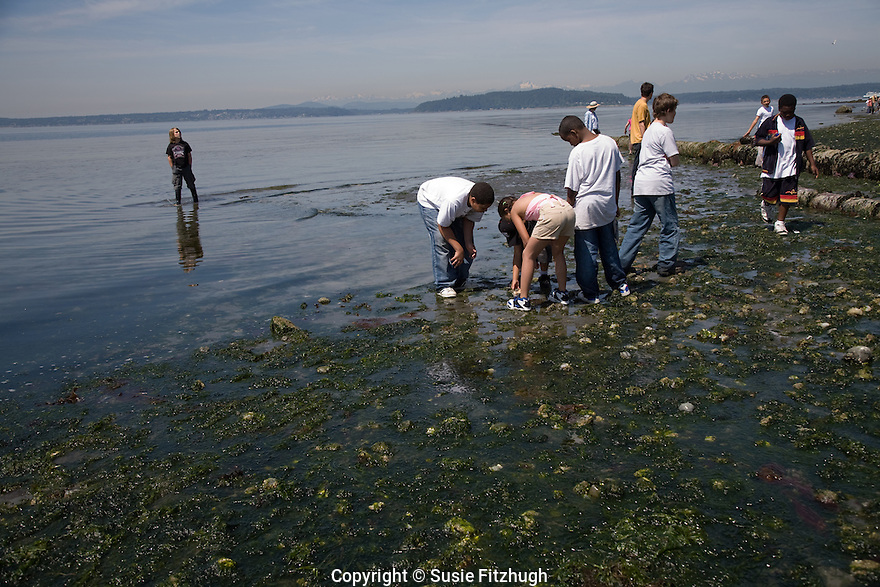 Fifth-graders look for the creatures revealed at low tide in June.